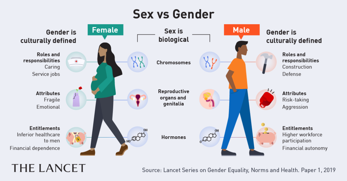 Illustration about sex and gender